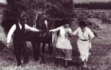 Helen walks through stubble in a large field filled with hayricks. With Polly alongside guiding her, Helen and a farmer hold the bridle of a horse which pulls a cart towering with cut hay, a farm worker balanced on the top.